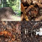 Mapiranje kolonija šumskih mrava i istraživanje faune mrava ZP