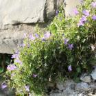 Upoznaj jedinstveni biljni svijet mediterana i submediterana Bosne i Hercegovine