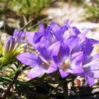Upoznaj jedinstveni biljni svijet mediterana i submediterana Bosne i Hercegovine - II dio