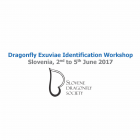 Dragonfly Exuviae Identification Workshop – Slovenia 2017